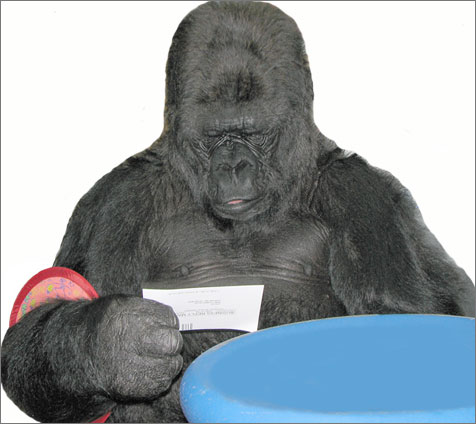 Koko reads cards