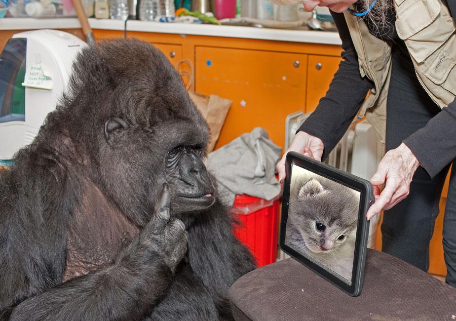 Help Koko & Michael Save their Species