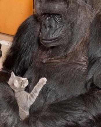 Koko's New Kittens
