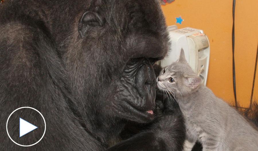 Koko Meets New Kittens