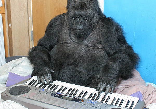 Image result for gorilla playing piano