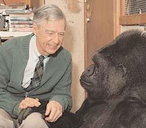 Koko S Farewell To Mister Rogers The Gorilla Foundation